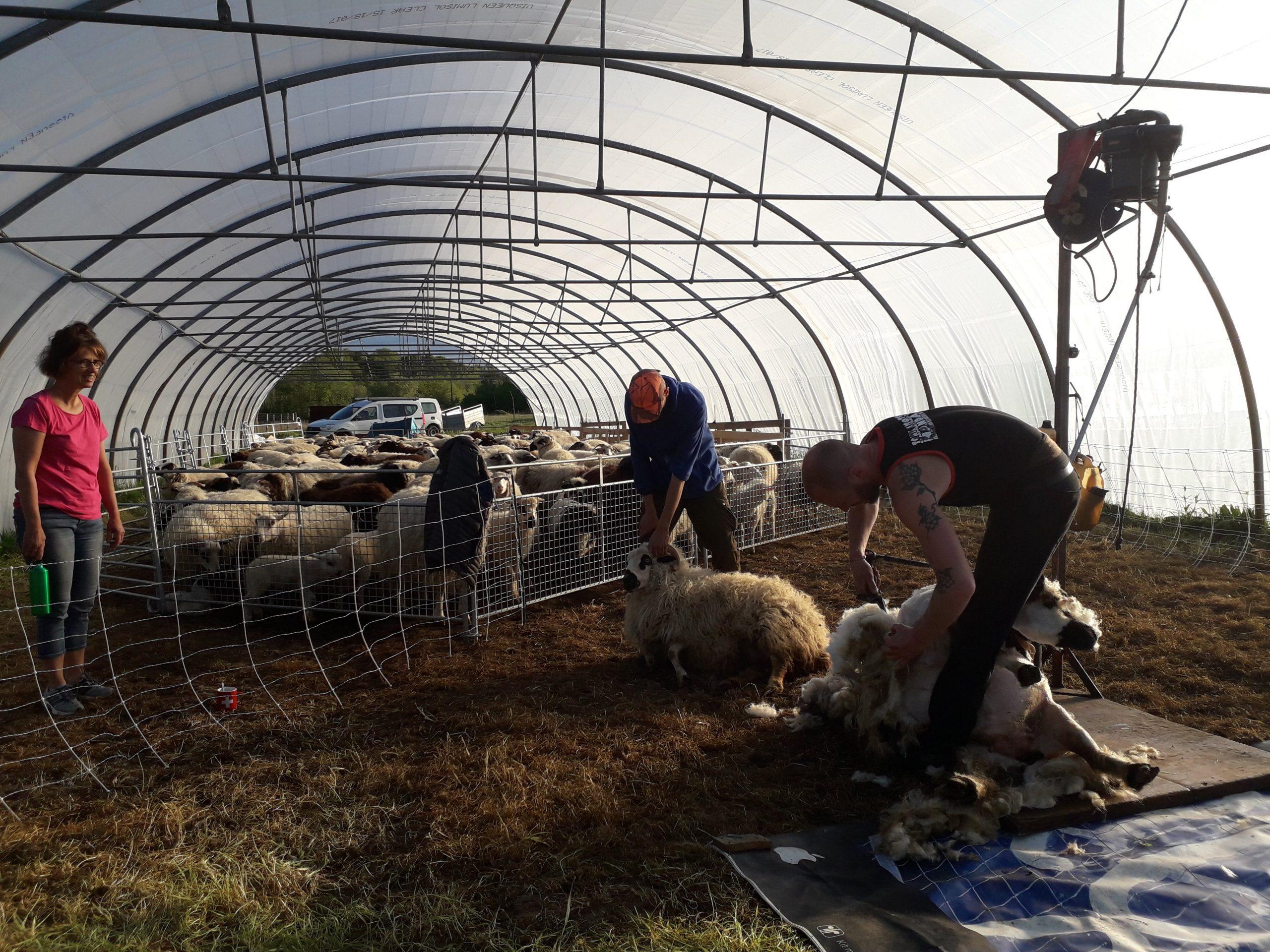 Laines De Par Ici Tonte moutons
